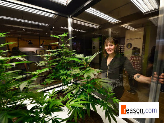Should marijuana be legalized but have a high taxation?