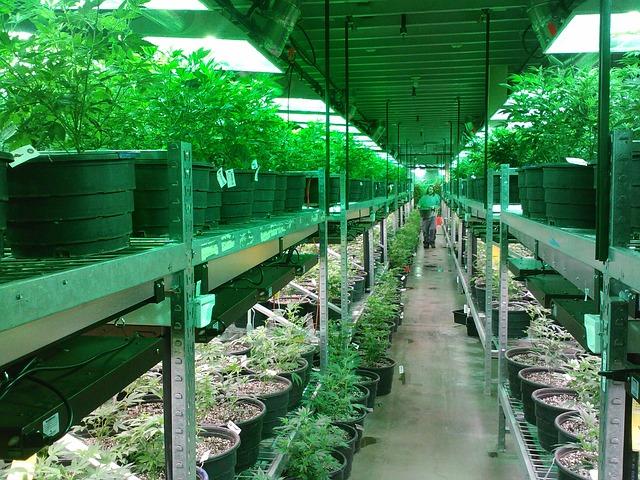 Marijuana Real Estate in California