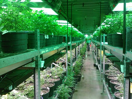 Marijuana Real Estate in California, a subject more people are supporting