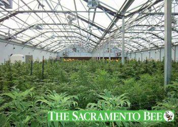 struggling-california-desert-towns-seek-tax-bonanza-pot-farms-2-3